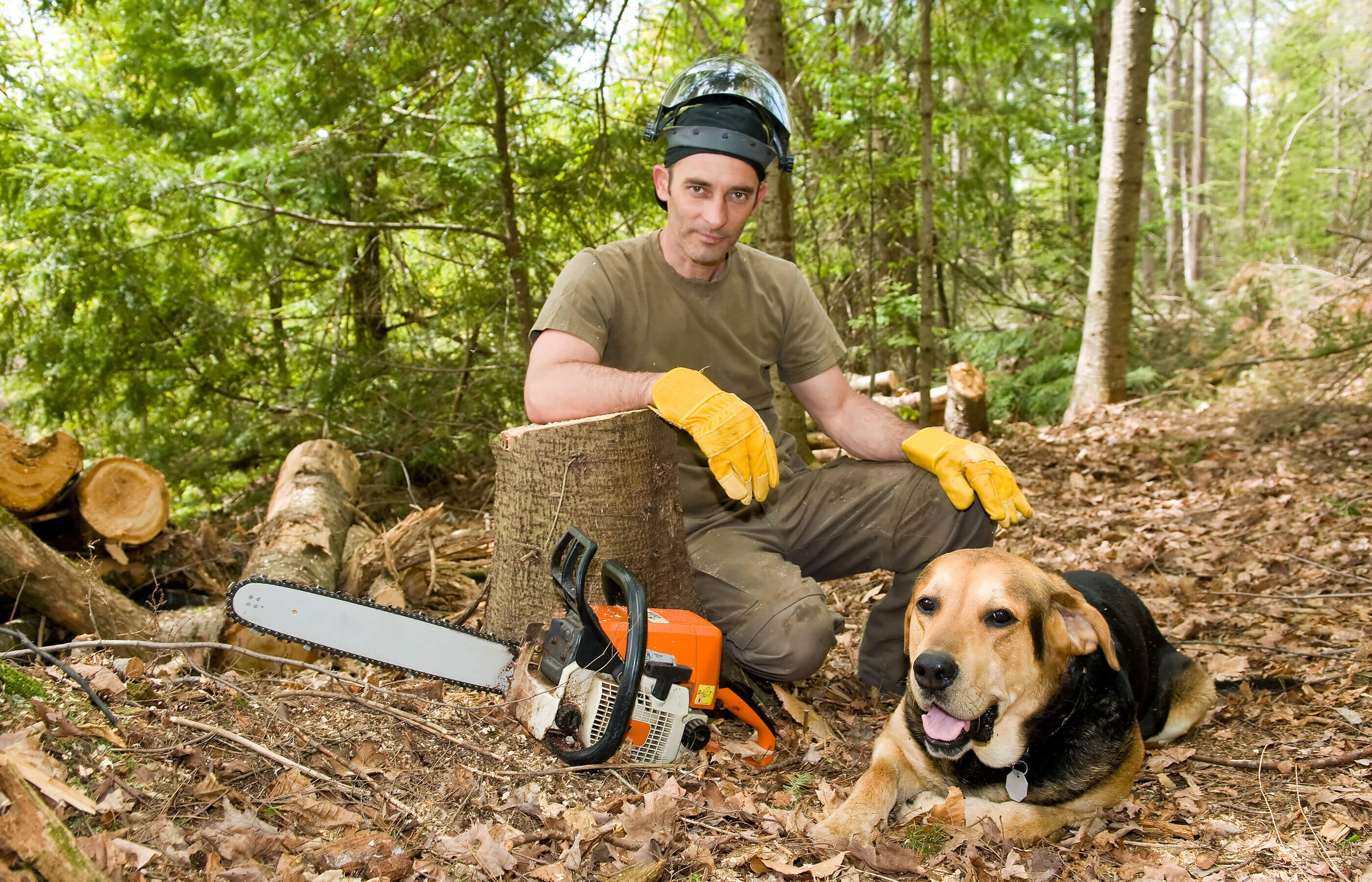 Forstwirtschaftliche Zusammenschlüsse