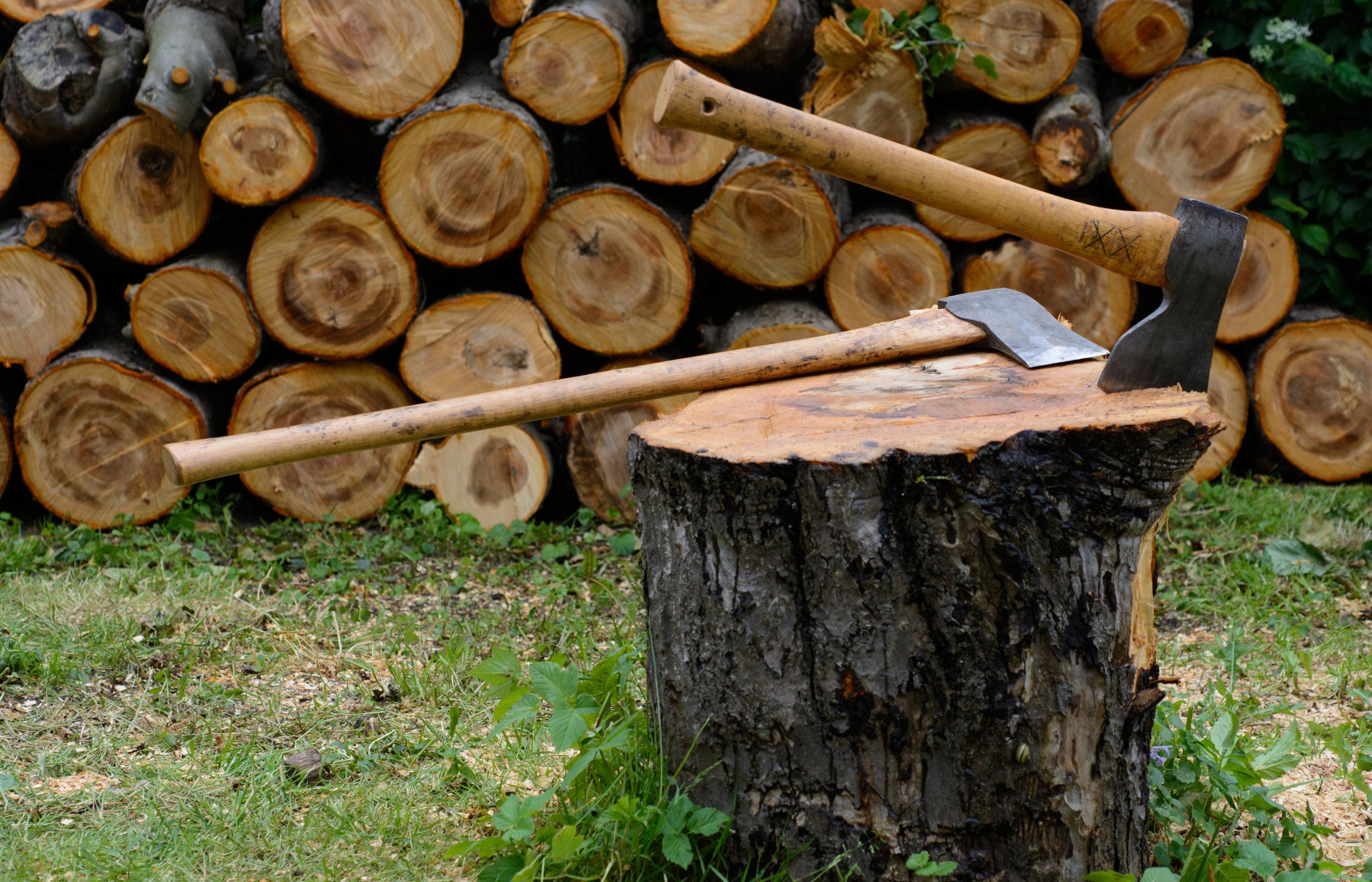 Der Wald ist ein bedeutender Wirtschaftsfaktor: Er steht für 180 Milliarden Euro Umsatz pro Jahr