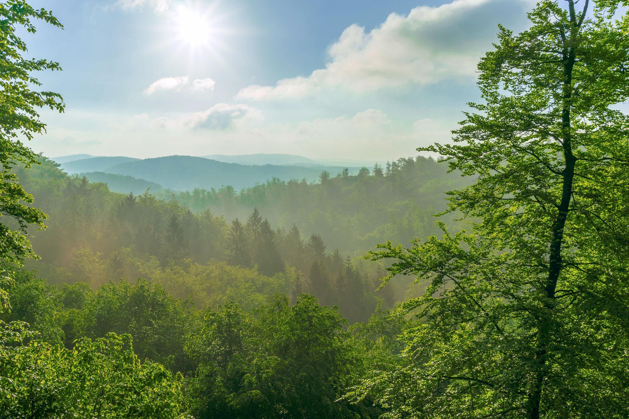 Der Wald in Deutschland