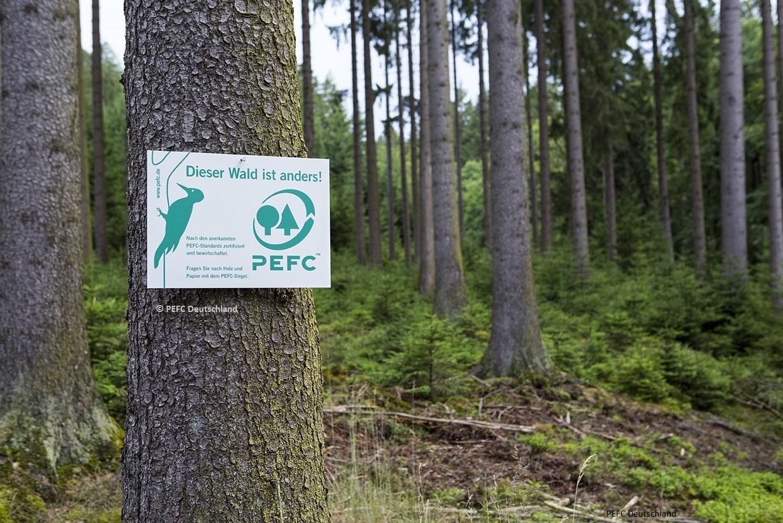 PEFC im Wald